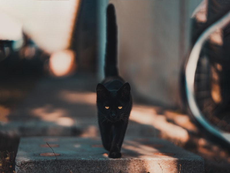 supersticiones de los gatos negros